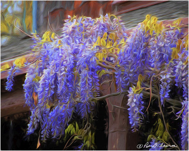 Wisteria on Back Porch